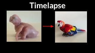 Pertumbuhan Burung Macaw | Time Lapse Growing Up Scarlet Macaw