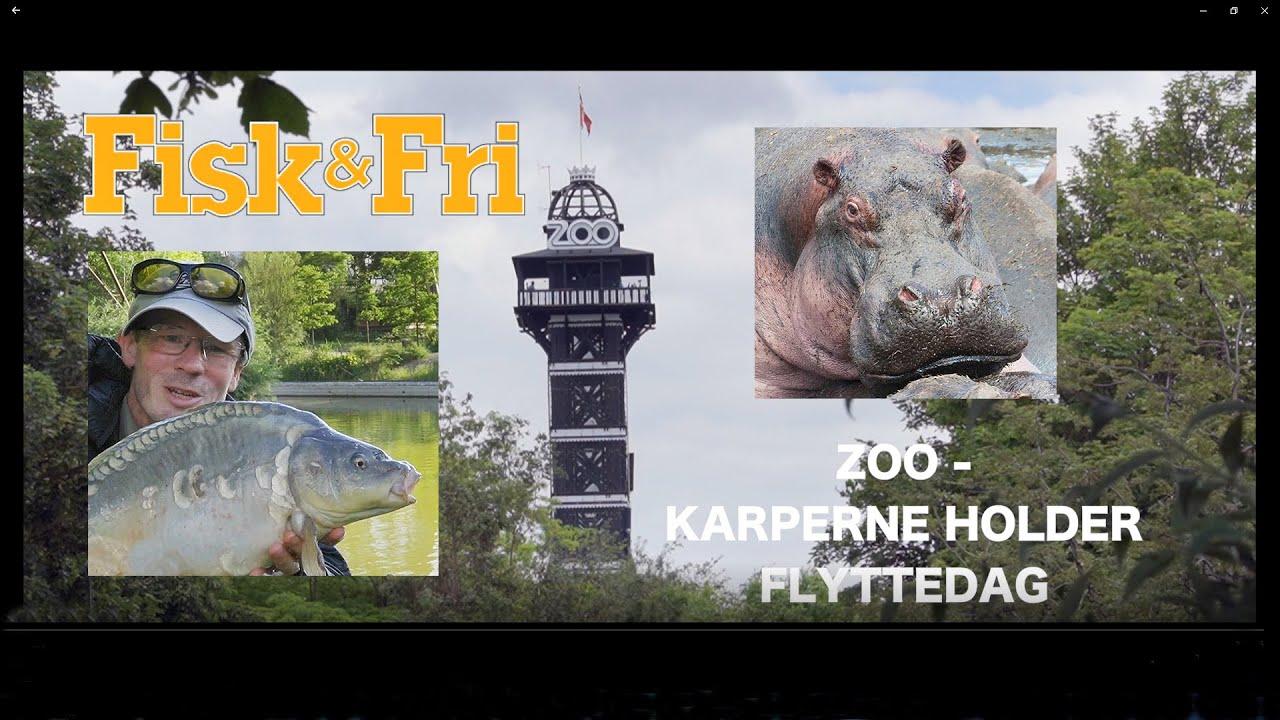 NY VIDEO: ZOO-KARPERNE HOLDER FLYTTEDAG
