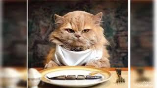 Музыкальная открытка с Котами???? Приколы с котами !забавные животные)