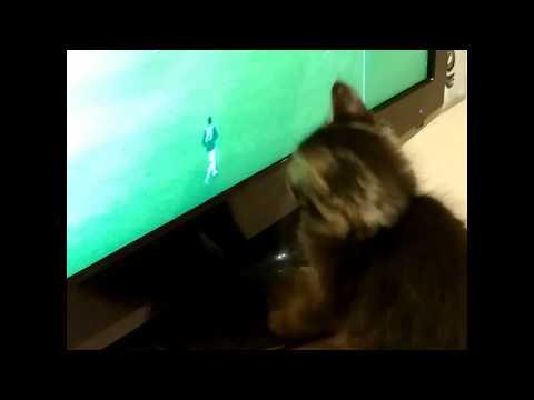 Котёнок смотрит чемпионат мира по футболу 2018