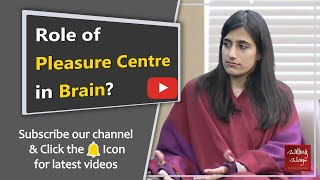 What is the pleasure center of the brain?