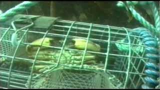 Shellfish Traps - The Inside Story (1998)