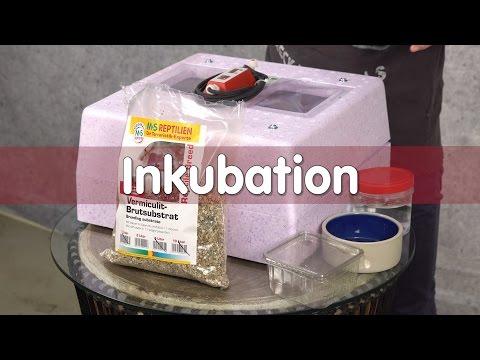 Reptil TV - Technik - Inkubation von Reptilien Eier