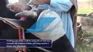 How blind Folded Oxen fetch water from a well