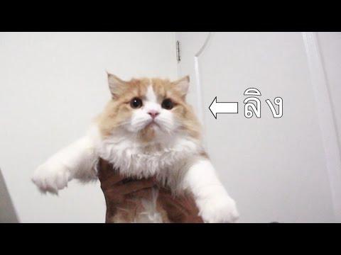 เวิร์มในอาเจียนในแมว