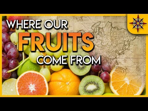 Do You Know Where Your Fruits Comes From? Find Out