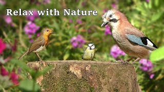 Birds and Bird Sounds Relaxation Extravaganza ~ Relax with Nature - 8 Hours NEW ✅