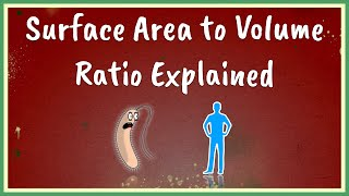 Surface Area to Volume Ratio Explained