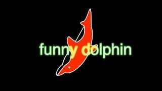 funny dolphin | Kholo.pk