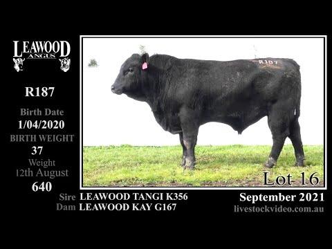 LEAWOOD TANGI R187