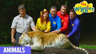 The Wiggles- There Are So Many Animals