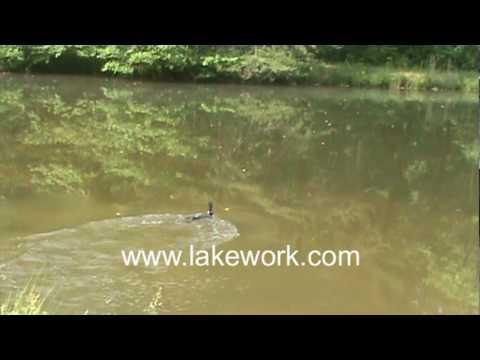 Rare Loon in Georgia Pond