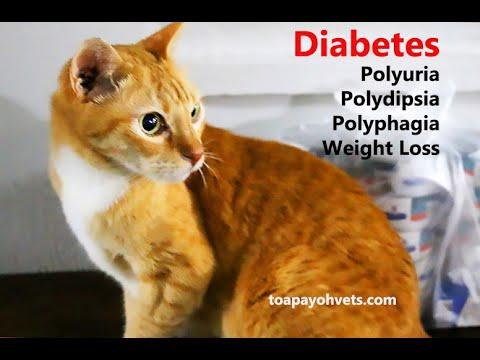 Stachelbeermarmelade für Diabetiker