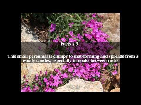 Vēzis simptomi prostatīta un adenomas