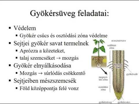 Kelas dalam filum nemathelminthes