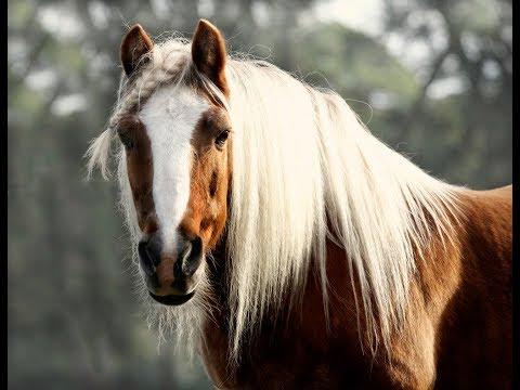 Żel do stawów koni mechanicznych i ich analogów