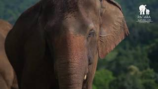 Your Help is Urgently Needed. Save Patara Elephant Farm.