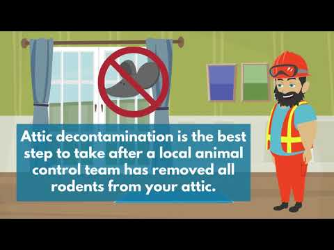 Attic Cleaning Pleasanton Ca Commercial Amp Residential