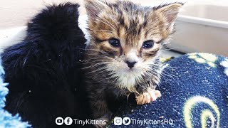 LIVE: Tiny orphan kittens and their Uncle Mirok!  TinyKittens.com