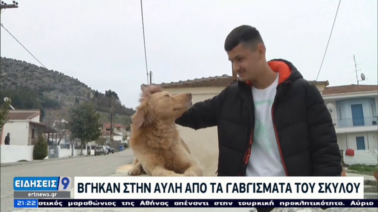 Διπλοί σεισμοί στη Θεσσαλία | Ισοπεδώθηκαν περιουσίες | 07/03/2021 | ΕΡΤ