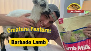 Caring for an ORPHANED LAMB at HOME   How to Feed a Bottle Baby Sheep   The Urban Rescue Ranch