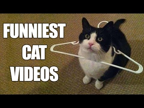 Funny Cats Compilation [MUST SEE] Funny Cat Videos 2016