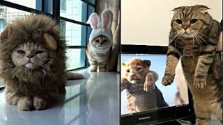 Spécial Tik-Tok chaton#Meilleures Vidéos Drôles de Chat et de Chien 🐶🐱- Best Funny DOGS et CATS #140