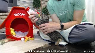 Pigpen demands his bottle - TinyKittens.com