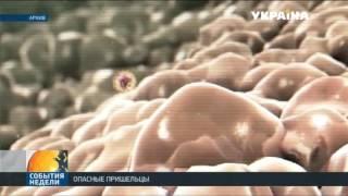 Грипп 2016 в Украине: как распознать, вылечить, предупредить