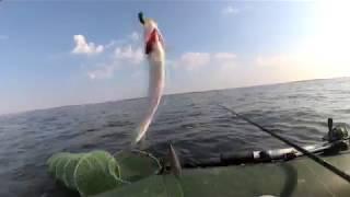 Ловля селёдки в чёрном море