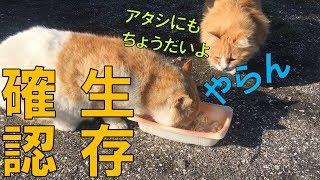 車中泊キャンプパック寿司の後のポンコツ野良の生存確認