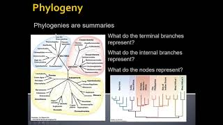 Unit 1 5 Introduction to Phylogeny default
