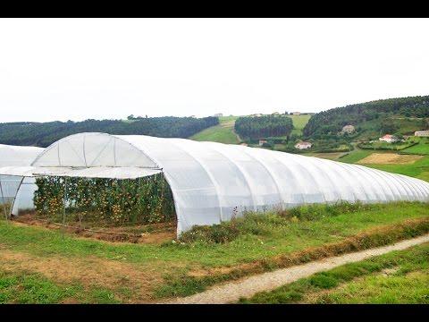 Cómo elegir un buen Plástico para un Invernadero - TvAgro por Juan Gonzalo Angel
