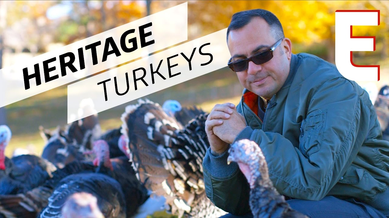 Heritage Turkeys Exist! You Don't Have to Buy Bad Factory Meat This Thanksgiving — The Meat Show thumbnail
