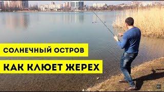 Рыбалка на озере старая кубань в краснодаре