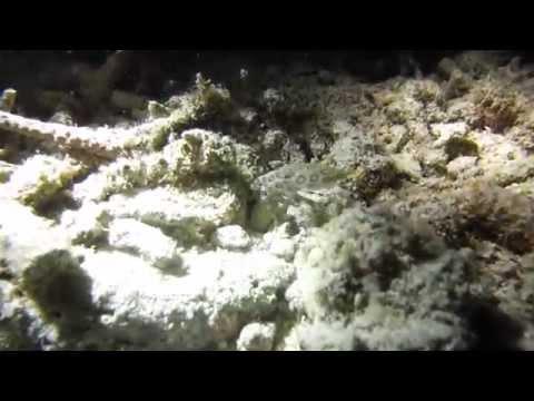 dive Lahoy, Bohol Lahoy Dive Resort,Philippinen