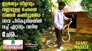 Wow Largest ever Ratsnake caught by Vava Suresh | Snakemaster | EP 410