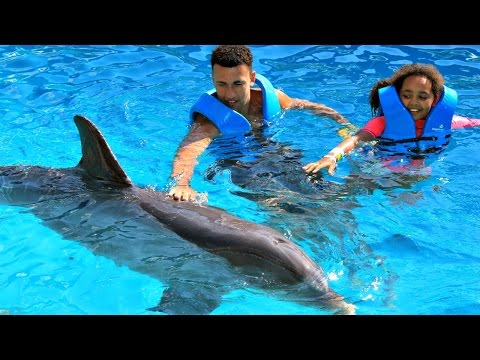 Dolphin Ecards Hi friends This was a super awesome experience..