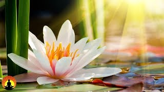 Meditation, Zen Music, Relaxation Music, Chakra, Relaxing Music for Stress Relief, Relax, ✿3318C
