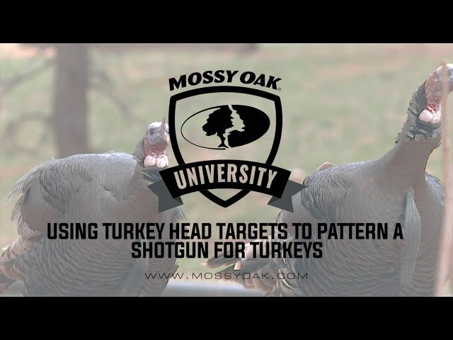photo about Printable Turkey Targets identified as How In direction of Routine A Shotgun for Turkey Wanting Mossy Oak