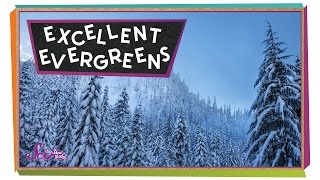 Excellent Evergreens