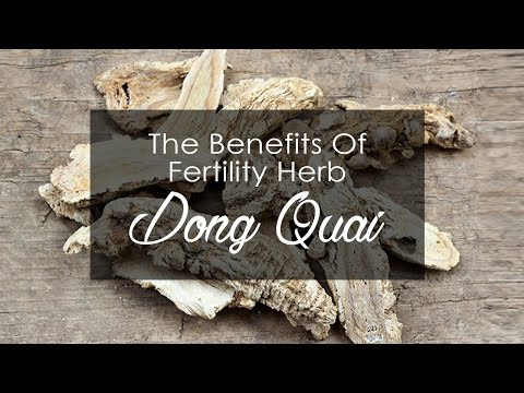 The Benefits Of Fertility Herb Dong Quai