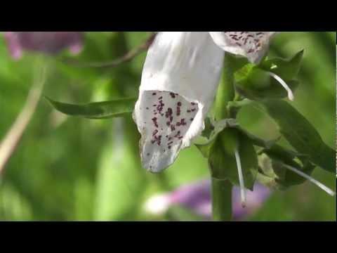 Красивая природа. Красивая музыка. Фильм 3. ХД