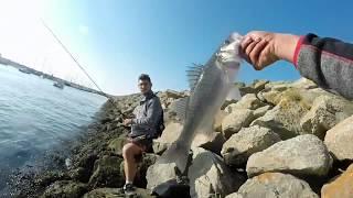 Pêche Du Bar Aux Leurres: Un Mois De Juillet Varié En Espèces