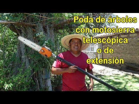 Poda de arboles con motosierra de extensión o telescopica