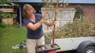 Gartenabfälle schreddern mit dem Leisehäcksler