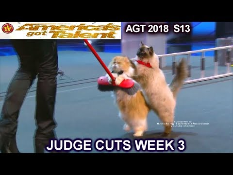 The Savitsky Cats FULL PERFORMANCE New Cats and Tricks  America's Got Talent 2018 Judge Cuts 3 AGT (видео)