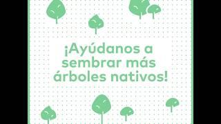 Conoce la nueva herramienta digital que te permite escoger el árbol nativo