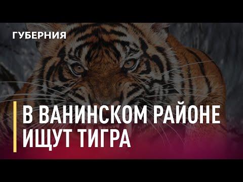 В Ванинском районе охотятся на тигра, который напал на человека. Новости. 11/01/2020. GuberniaTV