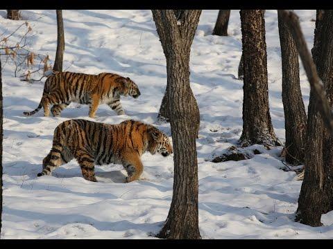 Яркий фильм о животных Приморского Сафари парка - Приморский Сафари Парк
